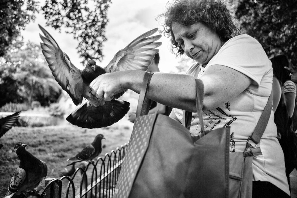 Pigeon Series - Alan Schaller - 11.jpg