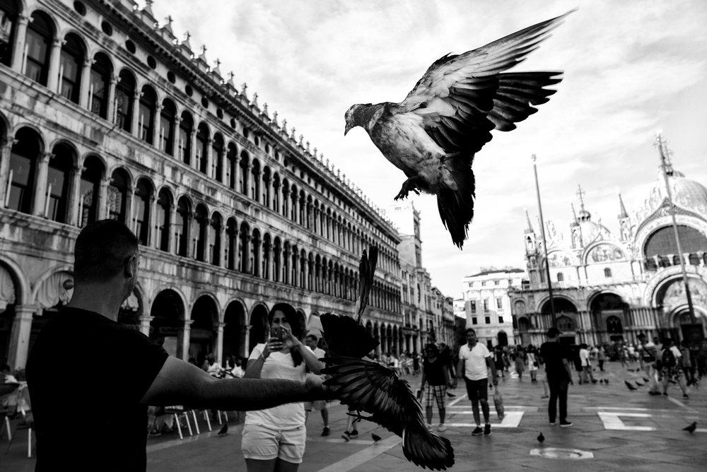 Pigeon Series - Alan Schaller - 10.jpg