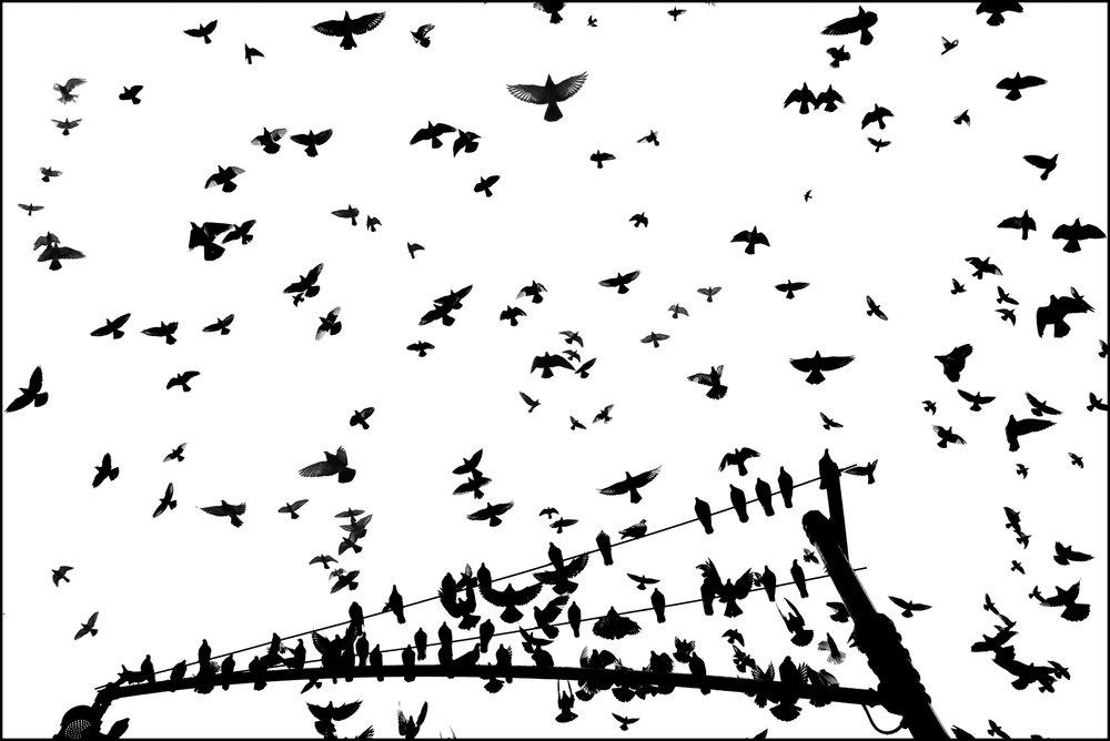 Pigeon Series - Alan Schaller - 12.jpg