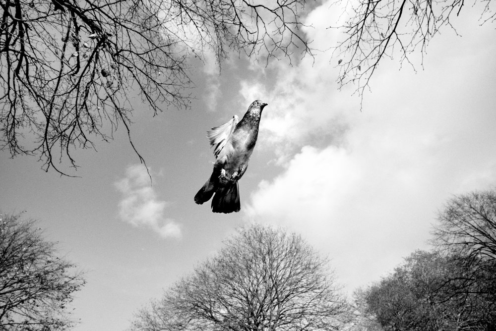 Pigeon Series - Alan Schaller - 15.jpg