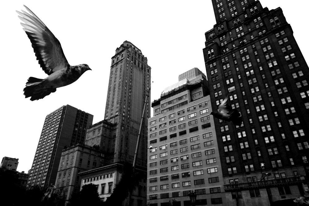 Alan Schaller Pigeons.jpg