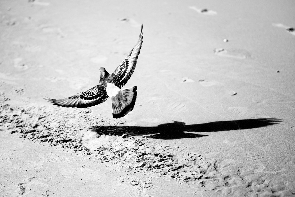 Alan Schaller Pigeons...jpg