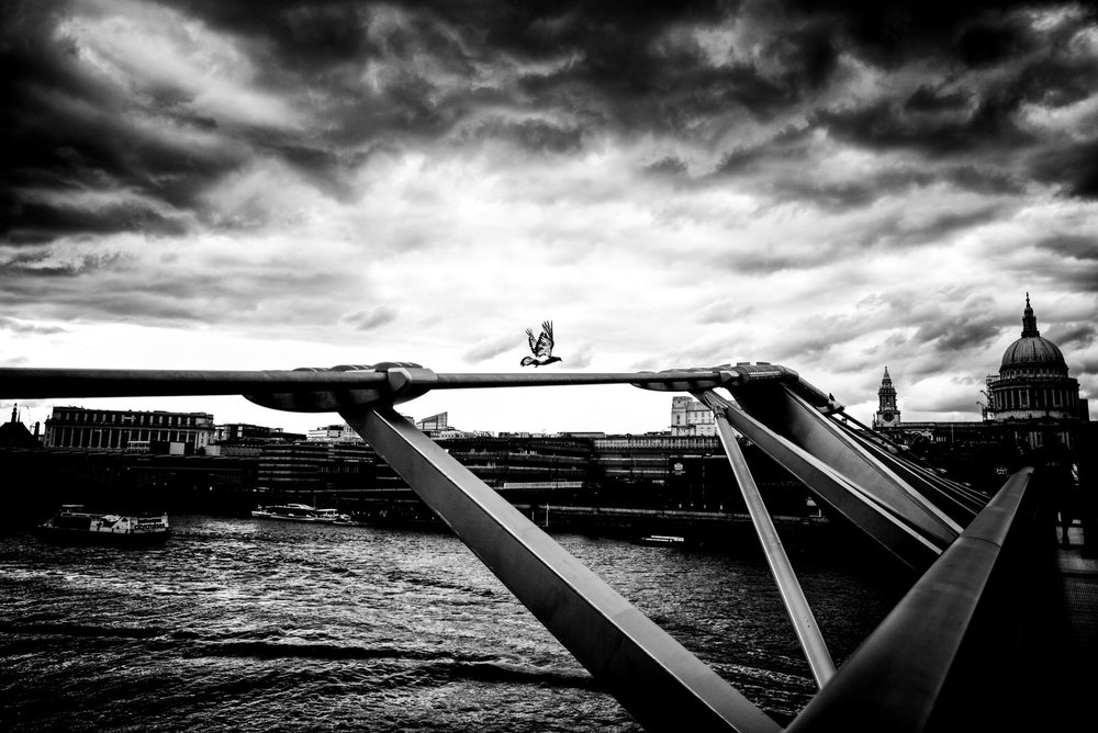 Alan Schaller London Pigeon.jpg