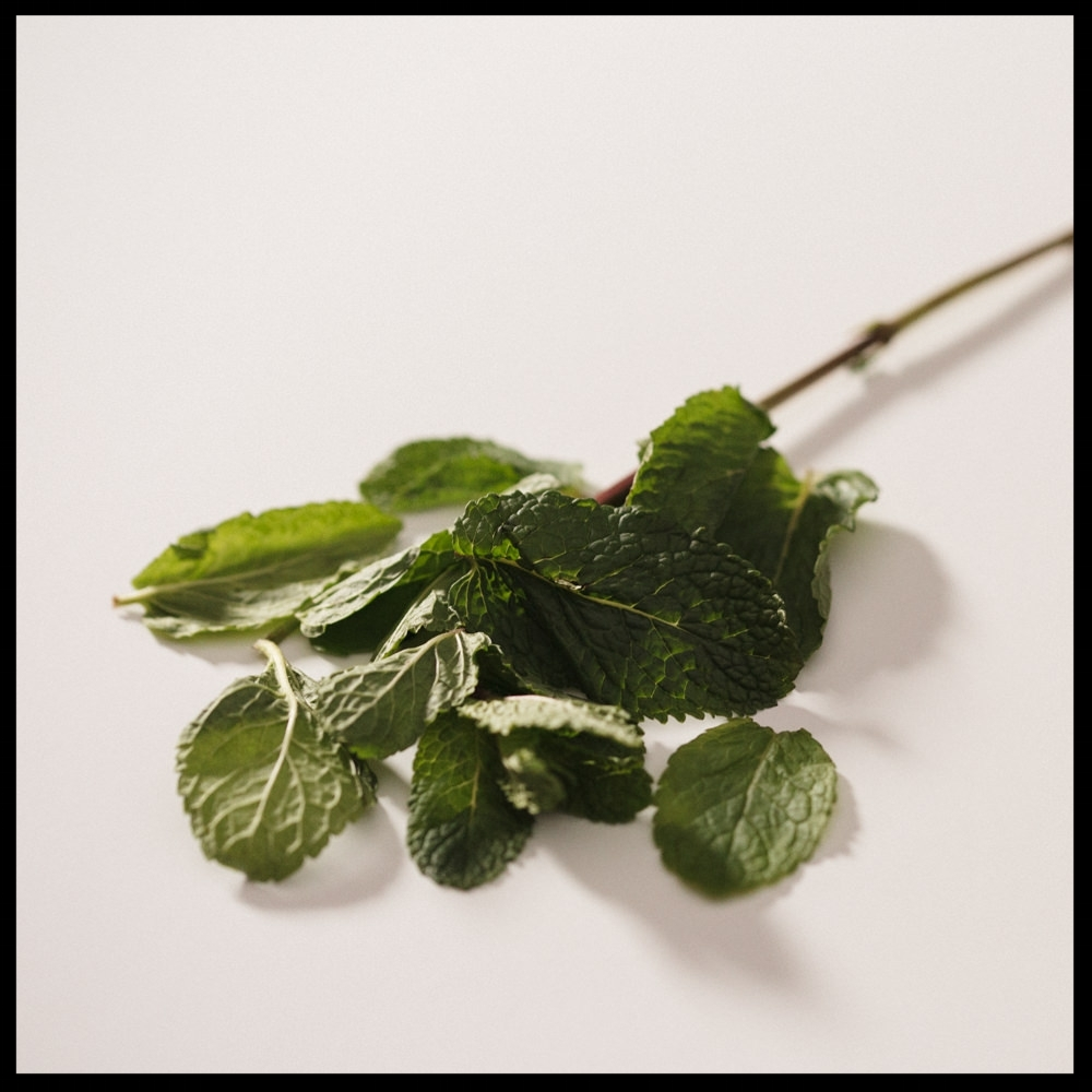Taste Notes: Fresh Leaf, Sweet, Mint Caffeine Free