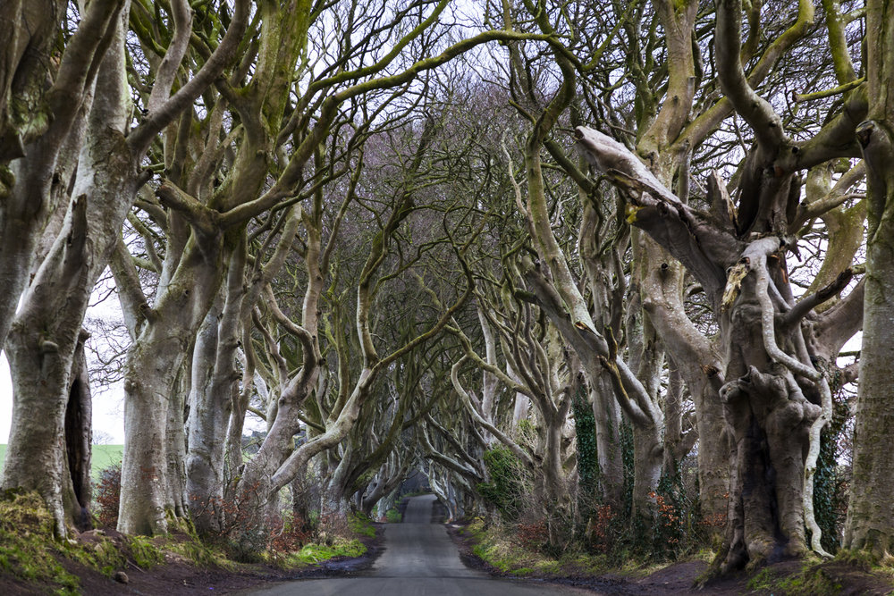 20180222 The Dark Hedges 017.jpg