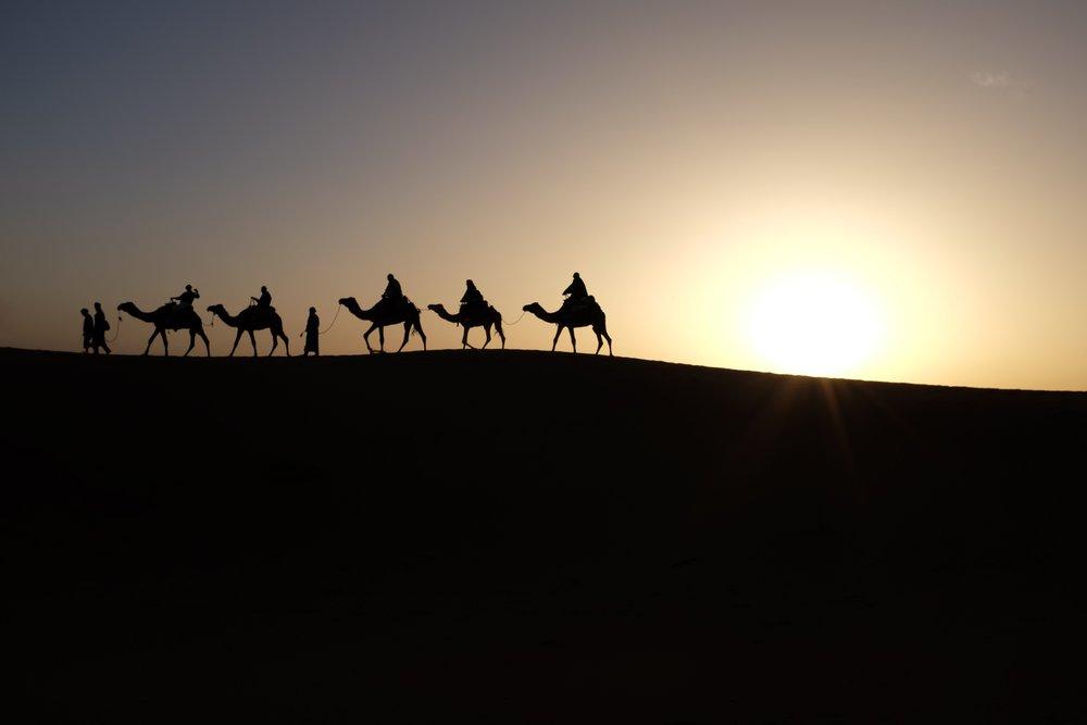 Wise Men Camels.jpg