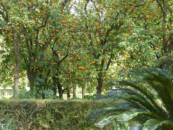 alcazar-orange-grove.JPG