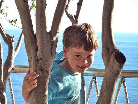 ischia-gabe-tree-2.jpg