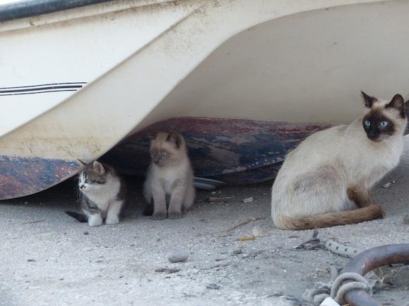 fav-cats.JPG