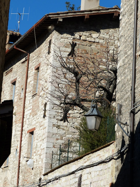 gubbio-tree-light.jpg