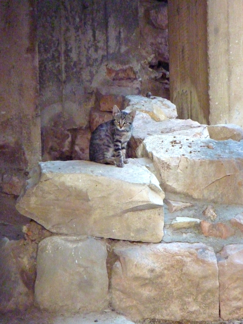 Kittens that live in Roman Ruins.