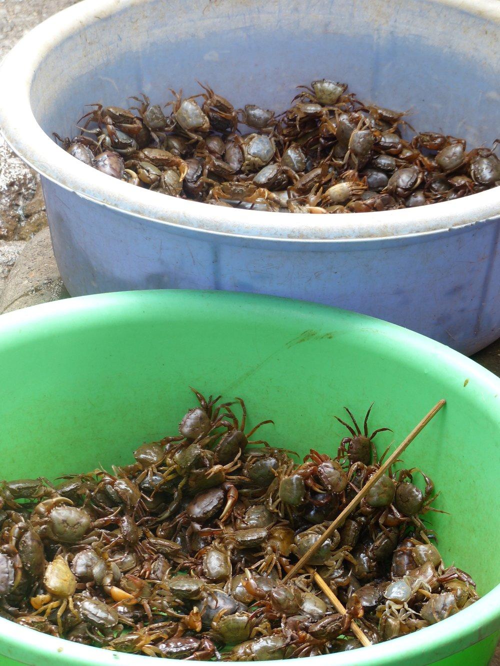 river crabs hanoi
