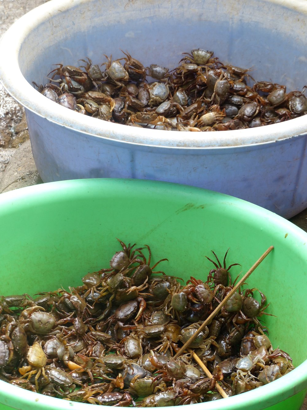 How are these river crabs eaten?