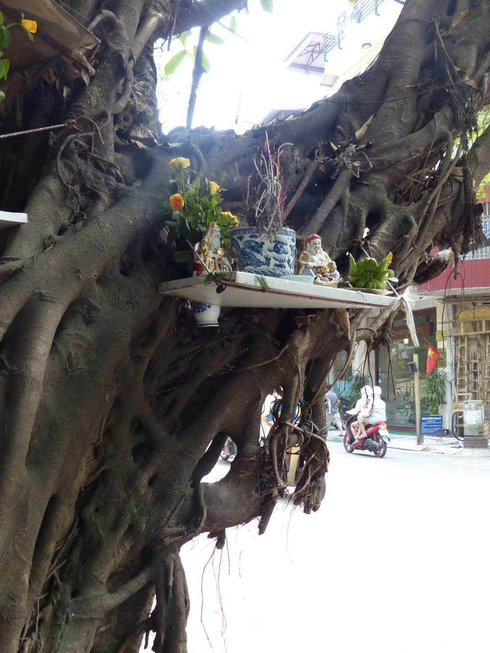 Why is there a shrine in the banyan tree?