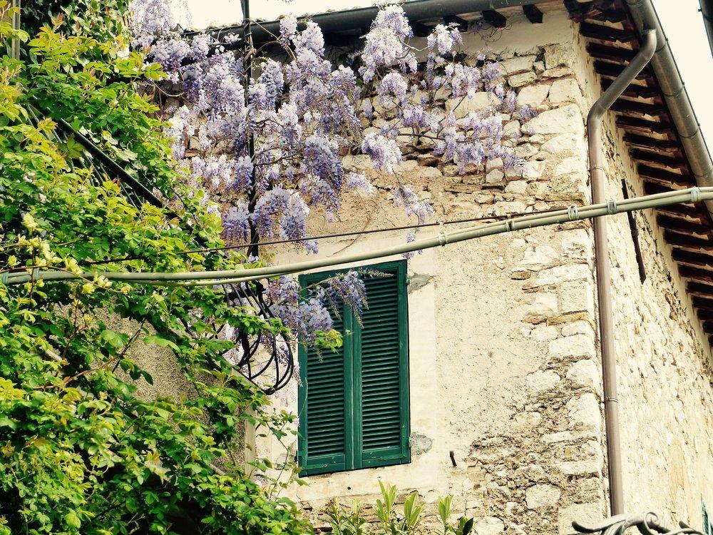 trevi_wisteria4.jpg
