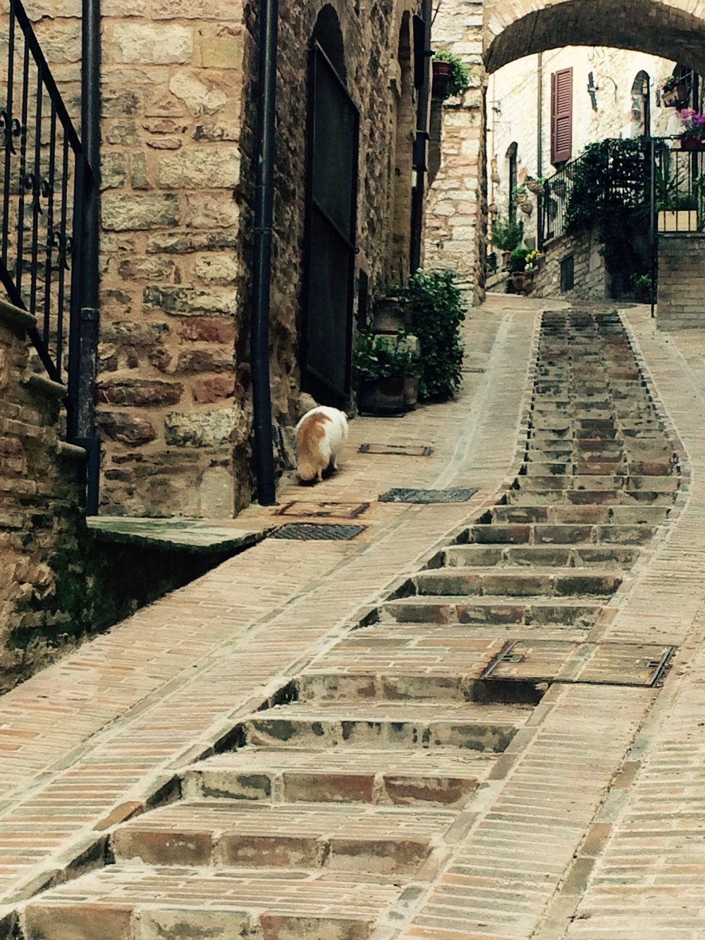 Cat in alley in spello, umbria