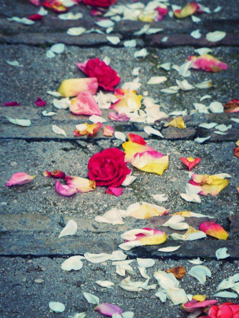 Final Infiorata petals in Spello, Umbria