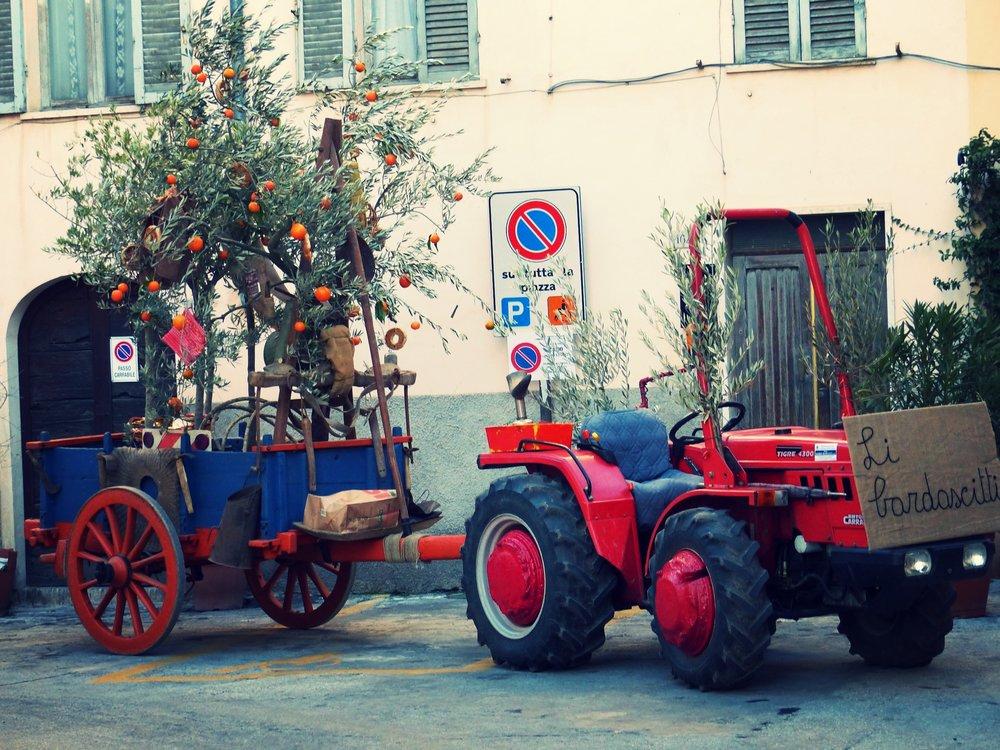Olive tree on a tractor at L'Oro di Spello, Umbria
