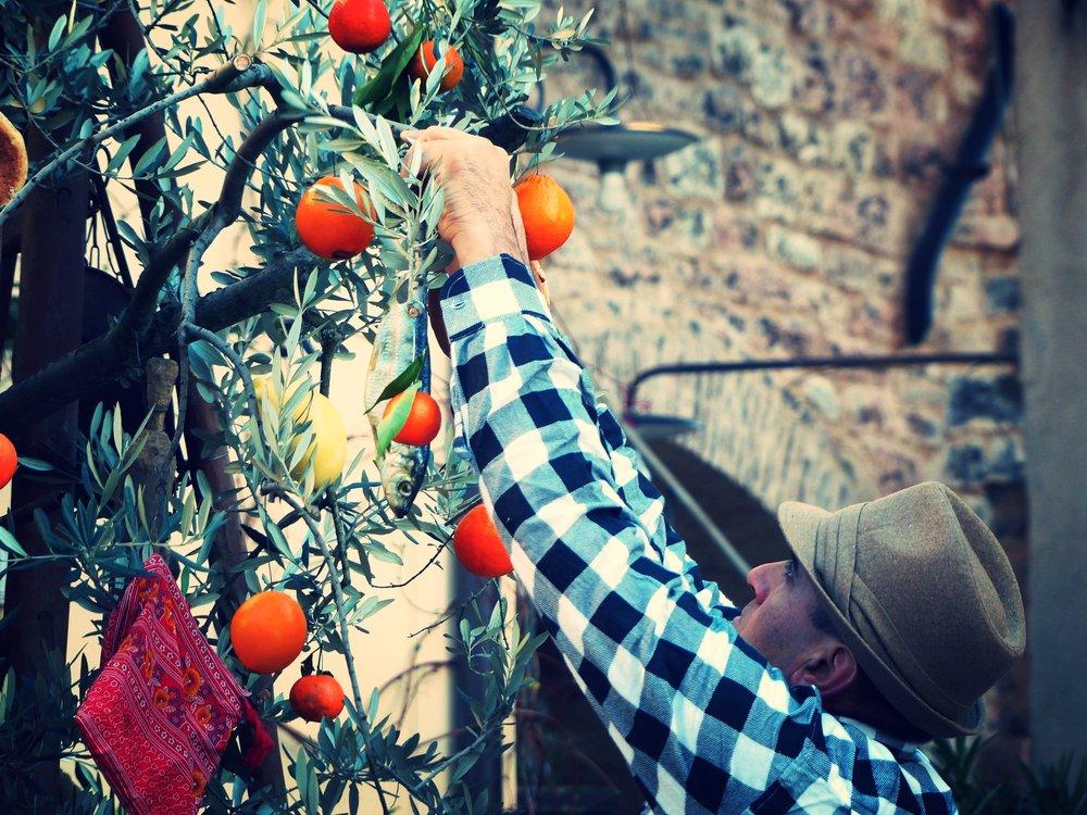 Festooning branches at L'Oro di Spello, Umbria