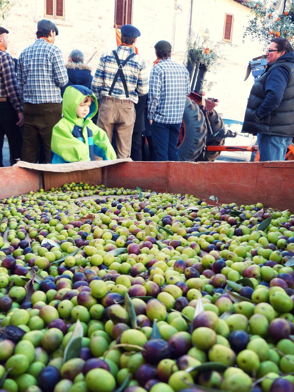 Olives at L'Oro di Spello, Umbria