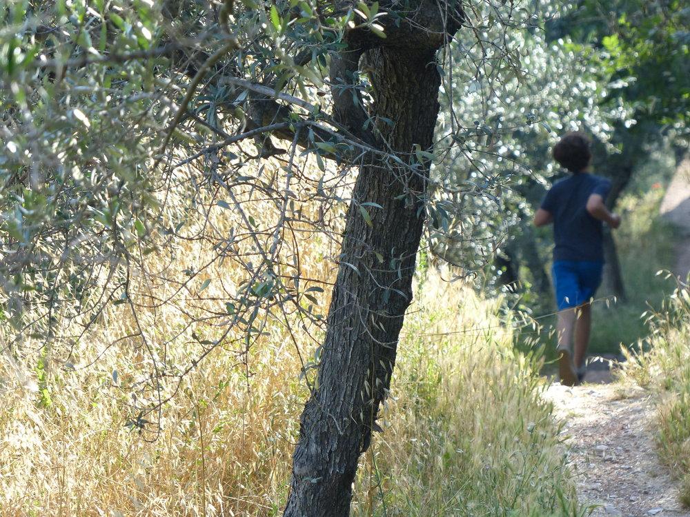 spello-aqueduct-Gabe-trails.JPG