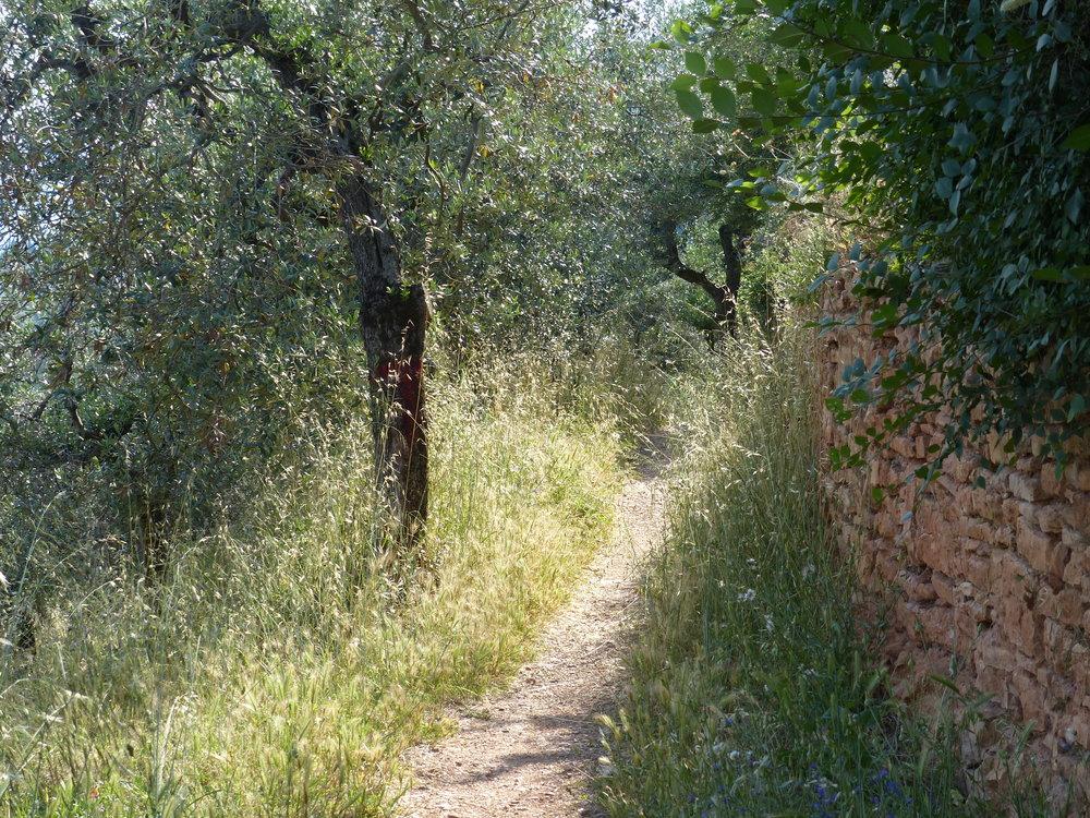 spello-aqueduct-trail.JPG