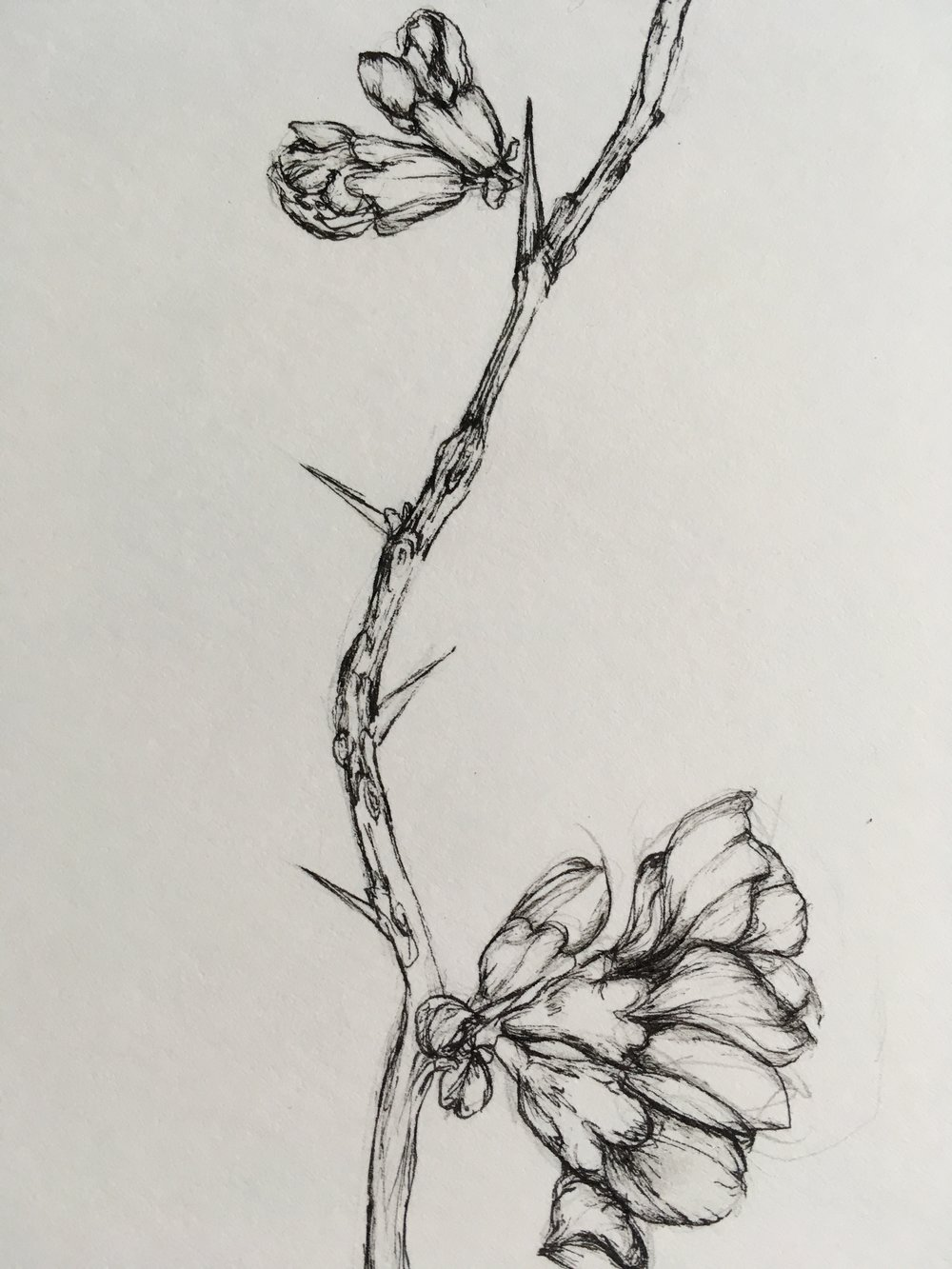 Siena's botanical art