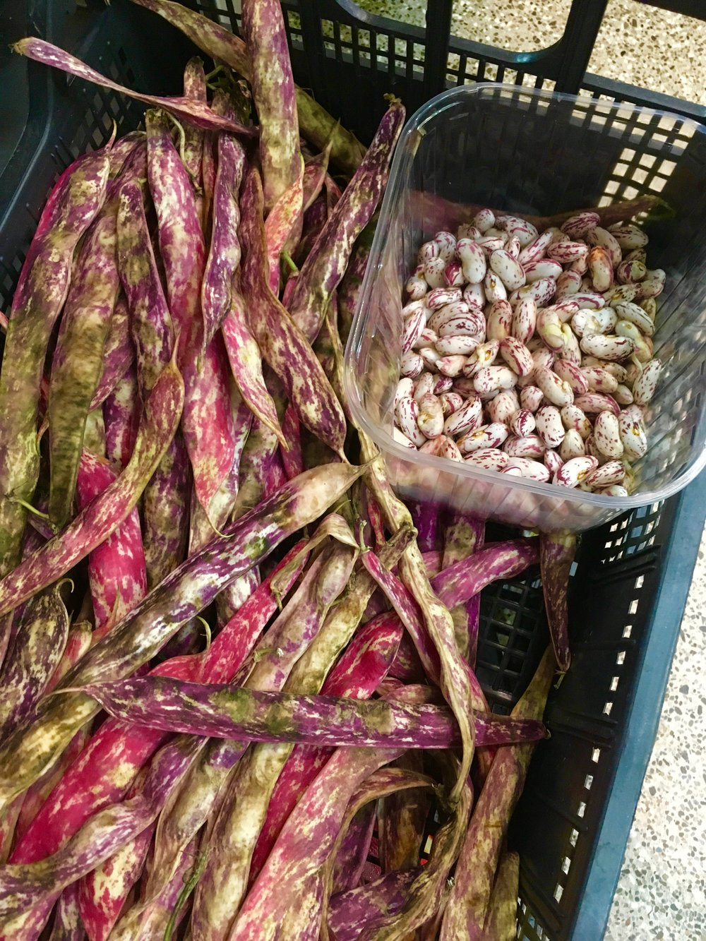 Beans in Bologna market