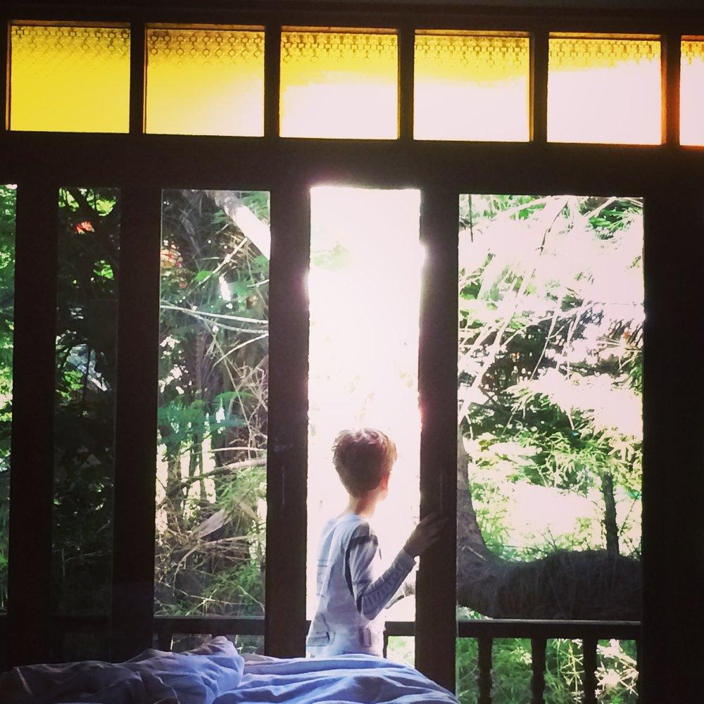 koh phangan jungle, thailand