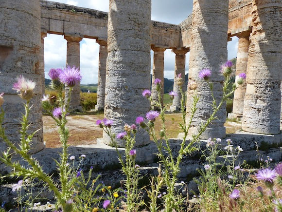 wildflowers and ruins in segesta sicily italy