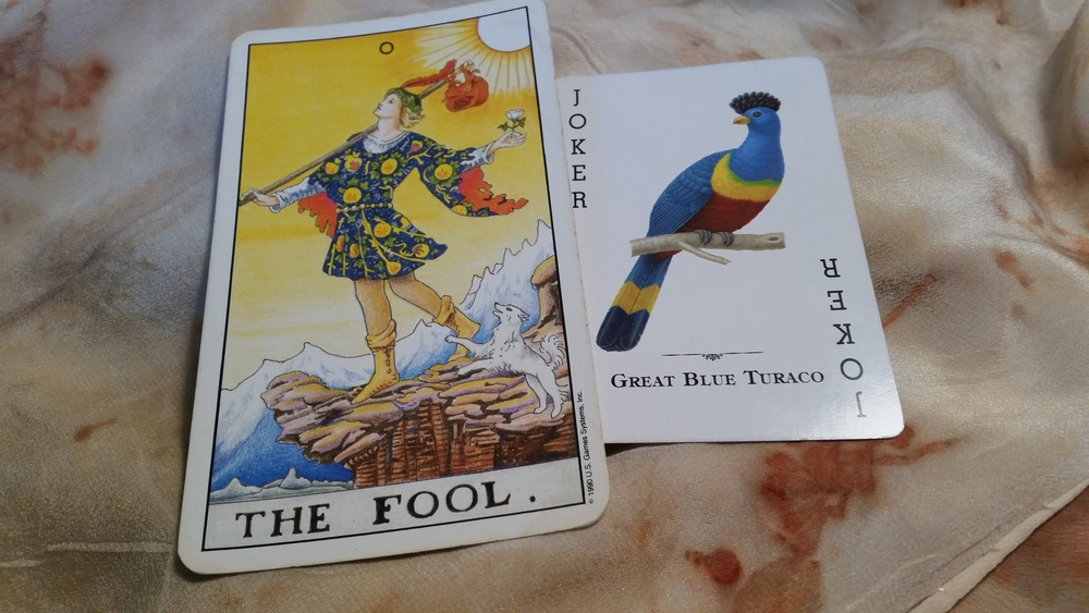 The head position, the fancy feather cap, the pose on a branch or cliff: It seems like this bird is a good fit for The Fool card.