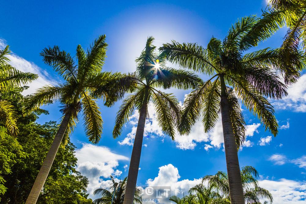 """""""Three Palms"""" at the Dunns River Falls Park"""