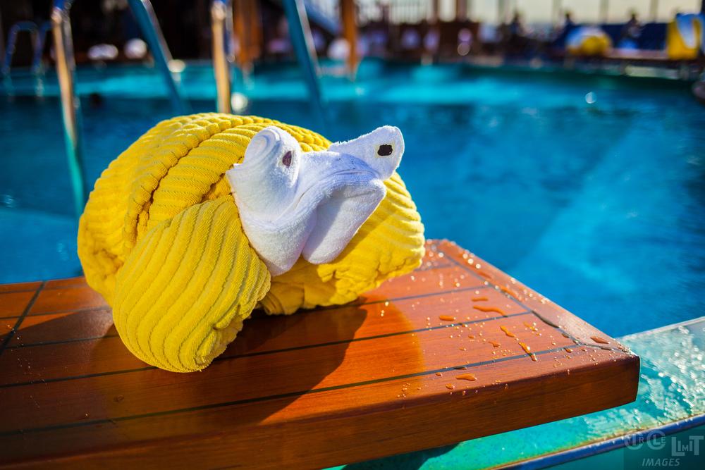 Towel Animal Display