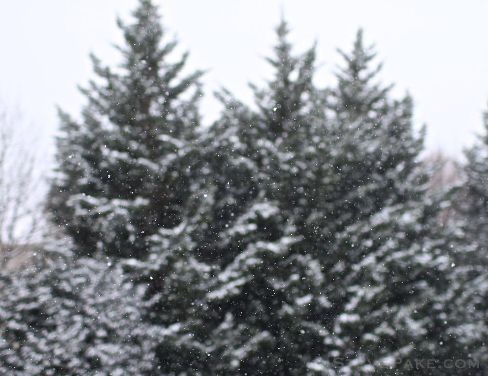 Snowzilla2016-001_GE3A4462.jpg