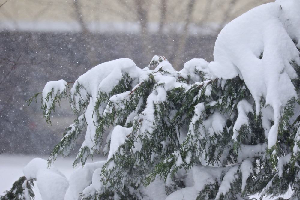 Snowzilla2016-013_GE3A4796.jpg