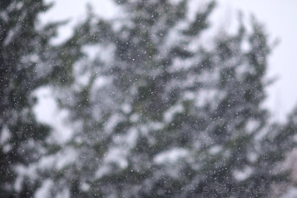Snowzilla2016-022_GE3A4876.jpg