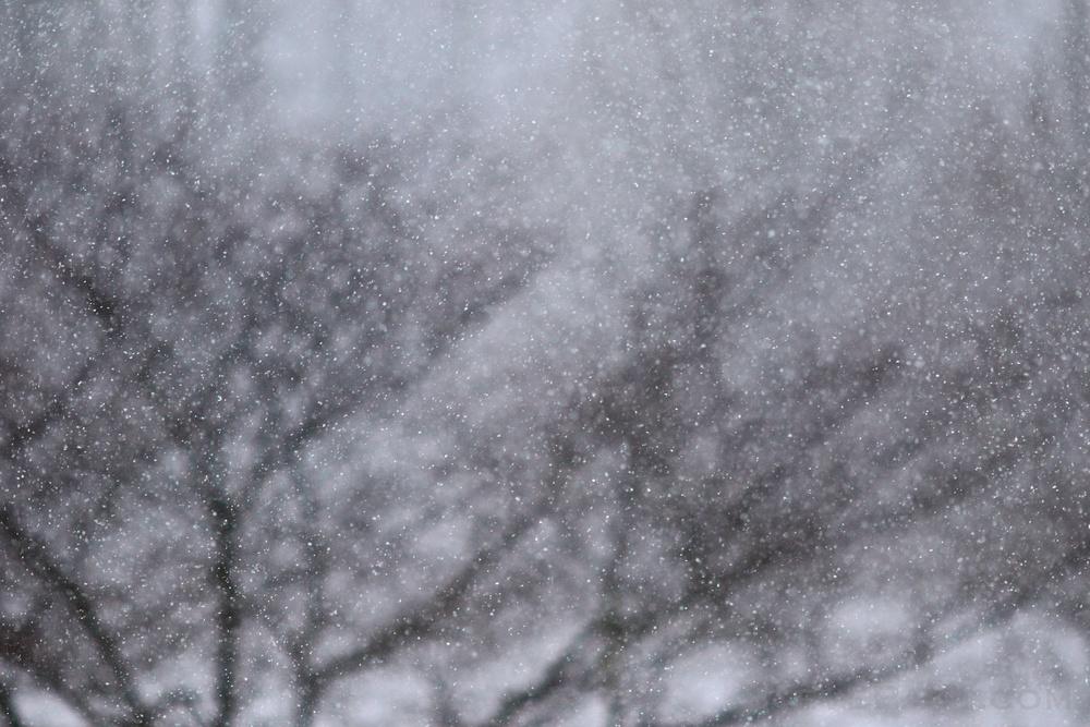 Snowzilla2016-023_GE3A4891.jpg