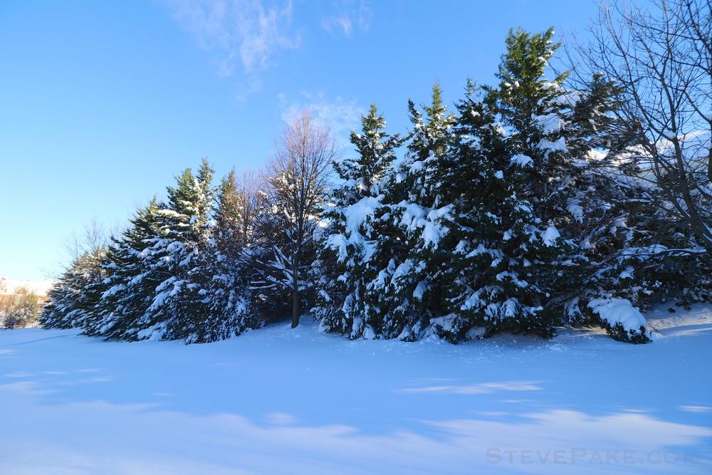 Snowzilla2016-039_GE3A5074.jpg