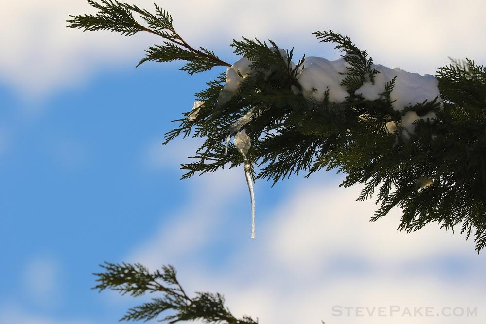 Snowzilla2016-089_GE3A5218.jpg