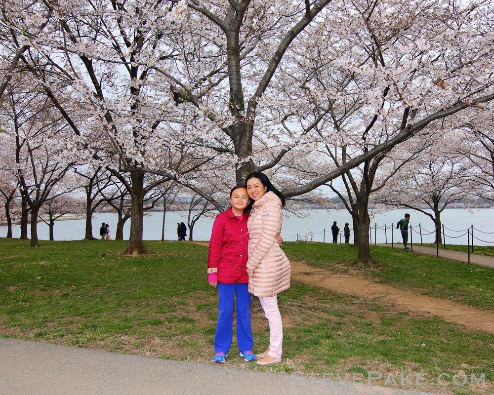 GE3A5712ap-2k_DC-Cherry-Blossoms-WM.jpg