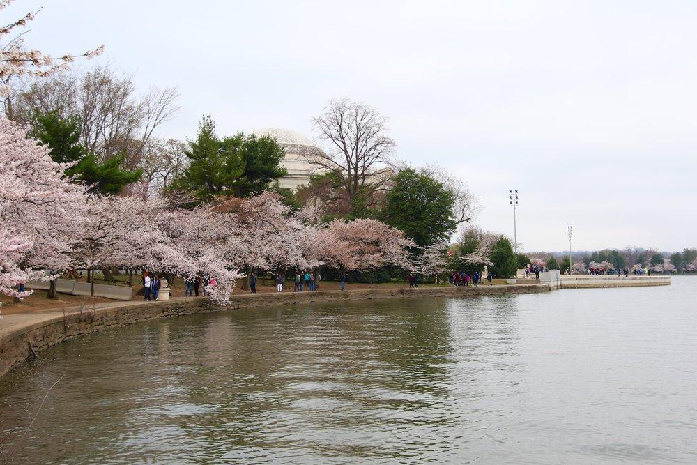 GE3A5720ap-2k_DC-Cherry-Blossoms-WM.jpg