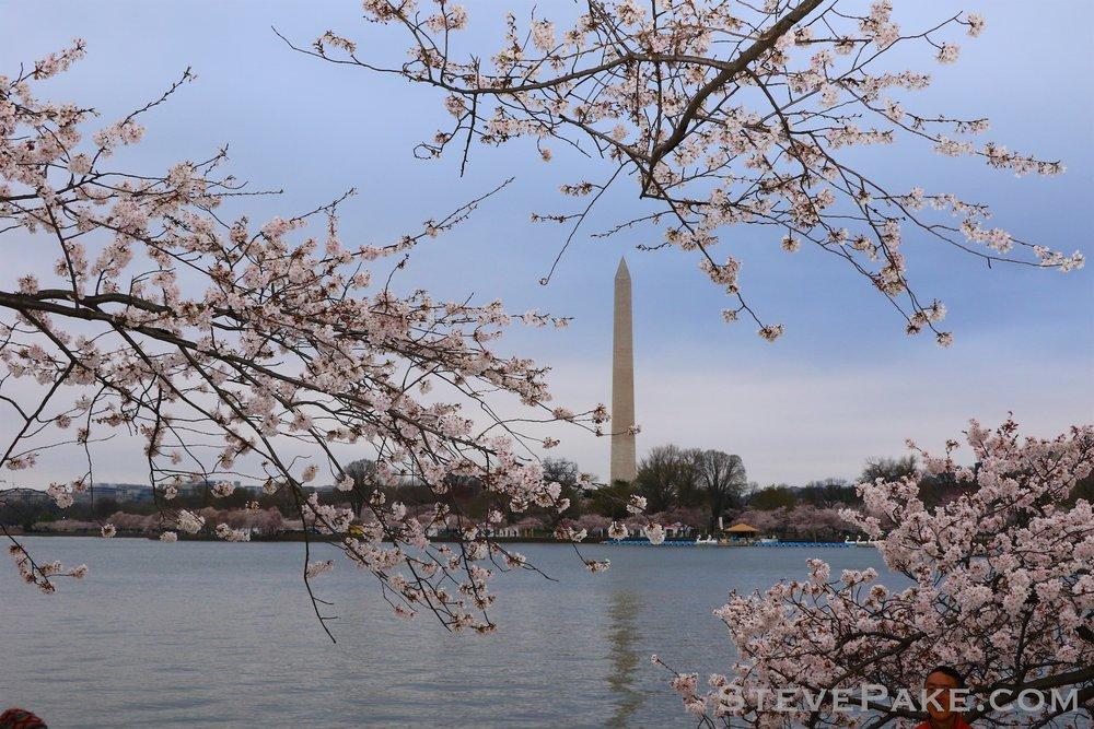 GE3A5734ap-2k_DC-Cherry-Blossoms-WM.jpg