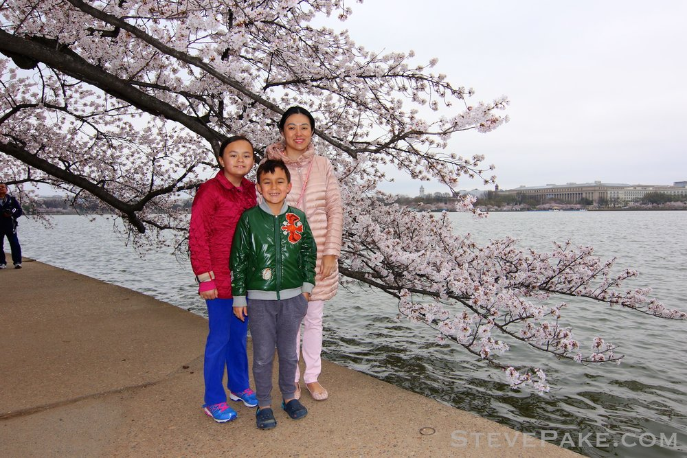 GE3A5802ap-2k_DC-Cherry-Blossoms-WM.jpg