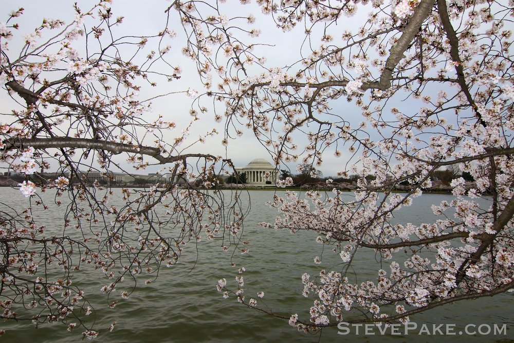 GE3A5805ap-2k_DC-Cherry-Blossoms-WM.jpg