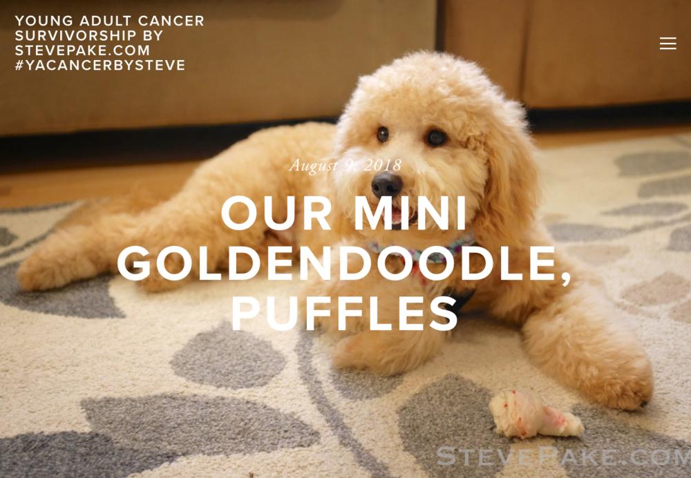 Puffles-Blog.png