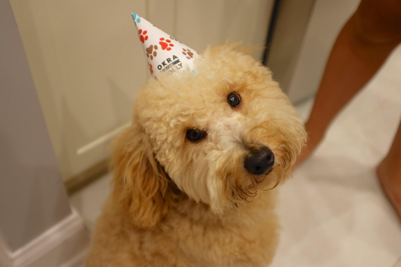 Happy 1st Birthday Puffles