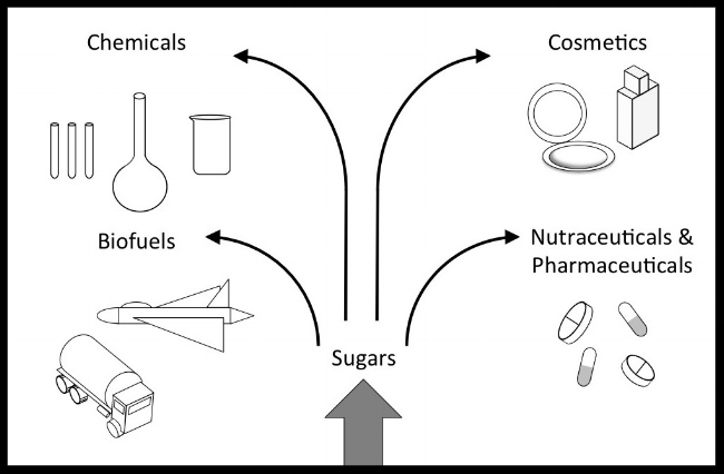 Sugars are the building blocks of bio-based products
