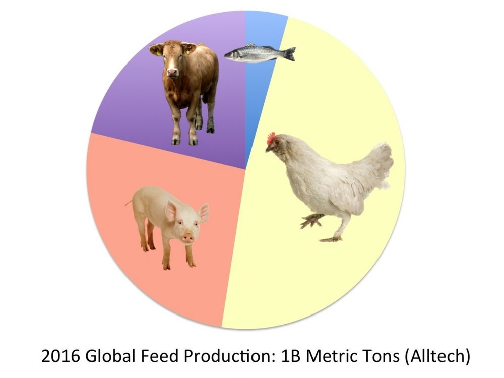 Poultry feed: the largest feed segment