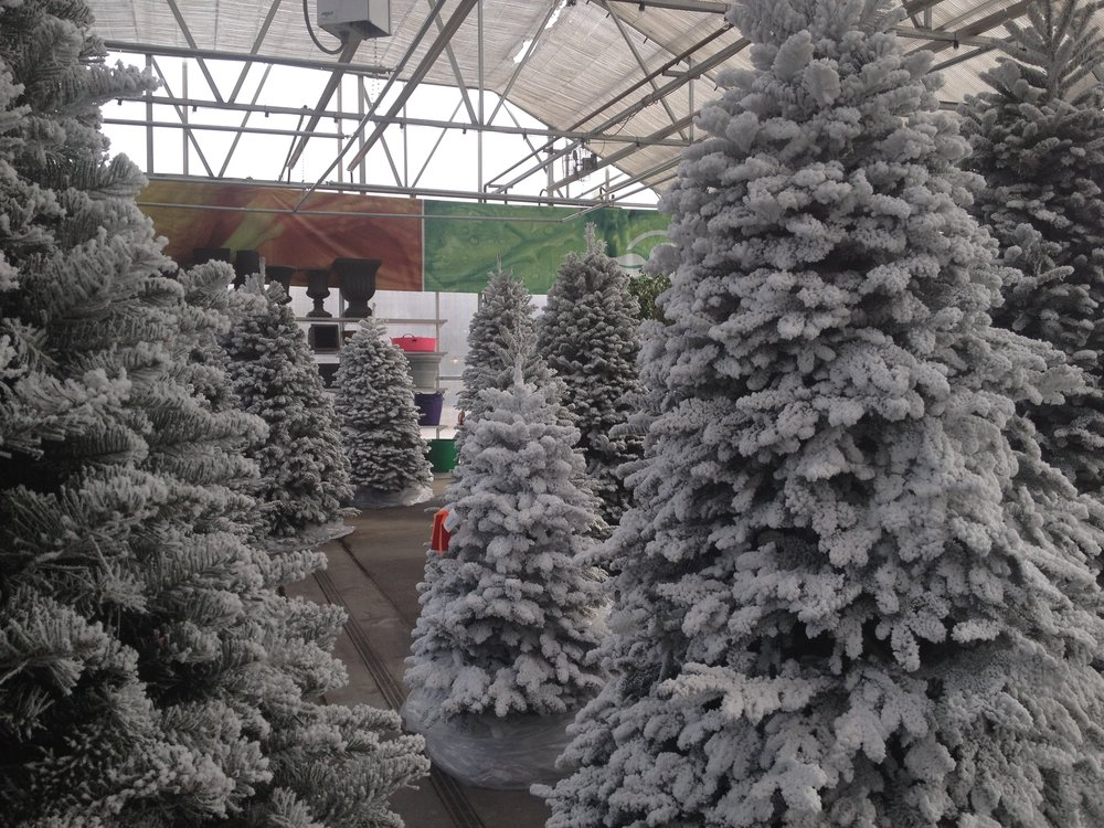 any southwood cut christmas tree can be snow flocked or you can pick from several pre flocked trees curious as to how this is done - Flocked Real Christmas Tree