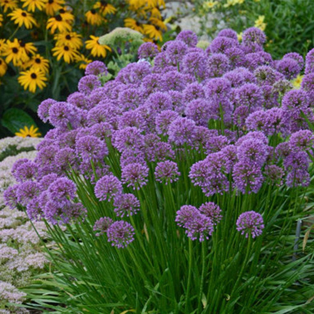 Plethora Of Plants Southwood Landscape Garden Center